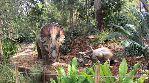 Taronga Zoo, Sydney (483444)