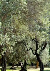 NatureLandscape