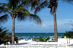 Saint Pete/ St. Pete Beach FL
