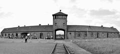 Auschwitz [07/2014]