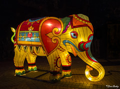 Chinese Lantern Festival 2015