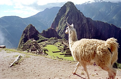 Peru-238 - Machu Picchu - Just walk in front of me...