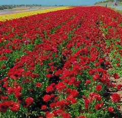 Fields of Wonder, Carlsbad, California