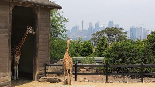 Taronga Zoo, Sydney (483465)