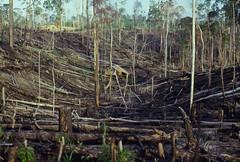 Borneo 1977