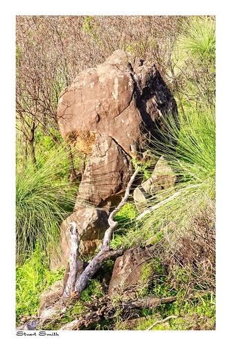 Rock Outcrop, Zig Zag Scenic Drive, Gooseberry Hill, Perth, Western Australia
