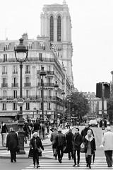 Pedestrian Paris (5)