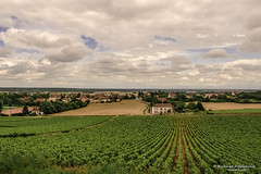 The famous vineyards of Rully (Rully/FR) - Photo of Dezize-lès-Maranges
