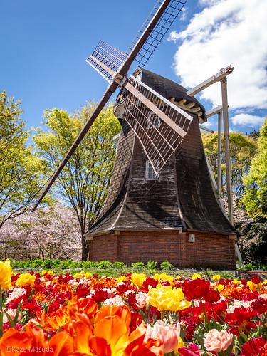 名城公園オランダ風車