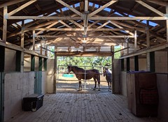 Horse stable in Helotes