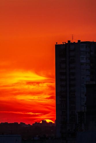 Flamígero.jpg