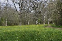 Averdon (Loir-et-Cher)