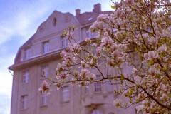 Nuremberg Spring 2019 - Magnolia