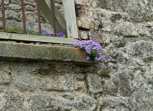 phlox on the wall 2