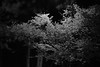 Photo:夜桜 - A Night Of Spring By tsuruta yosuke