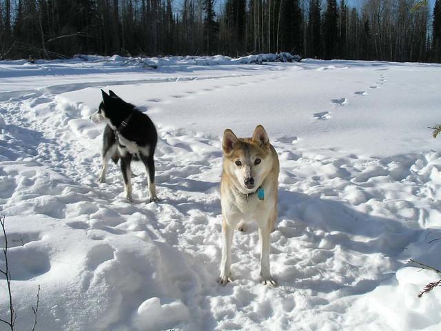 d-dogs-northfork