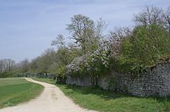 Marolles (Loir-et-Cher).