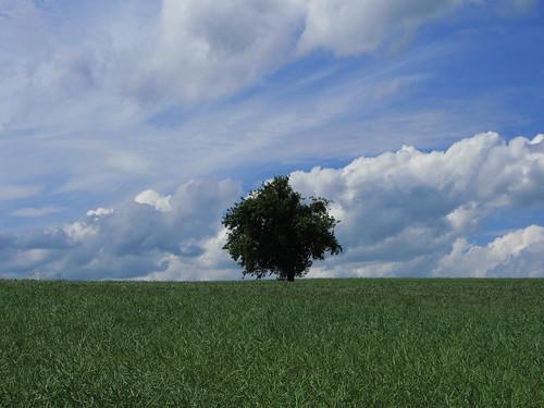 20120607 110 blau Wolken Baum