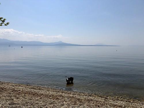 Geneva - 03 Oscar at Lake Geneva's Beach | Allaman, VD