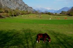 Prairie au hameau des Tourniaires - Photo of Piégut
