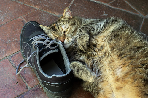 Alice loving dad's shoe