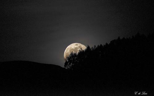 Orto lunar entre abetos