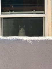 Neighbor cat