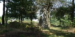 Le champ de menhirs de Sévéroué à Saint-Just - Ille-et-Vilaine - Août 2018 - 02 - Photo of Bruc-sur-Aff