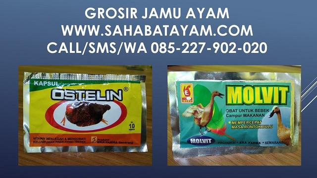 WA 085-227-902-020 Super Manjur Supplier Bahan Alami Untuk Pakan Ayam Surabaya