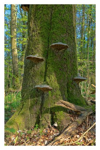 Urwald am Kleinen Gleichberg