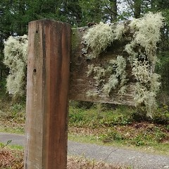 #lichen-covered #trail #sign #PNW #bryology