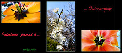 Interlude :Fleurs printanières                         1/3