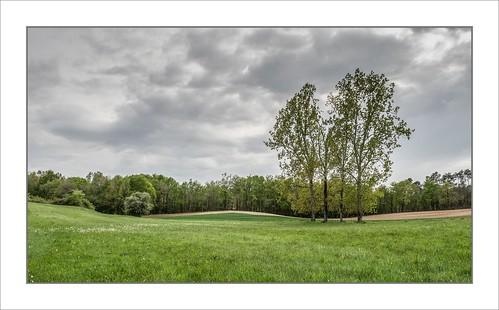 Meadow Near Saint-Pancrace