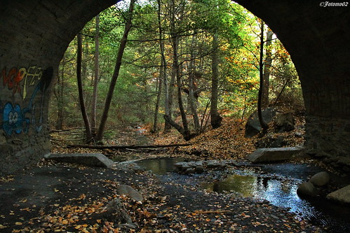 Bajo el Puente del Arroyo
