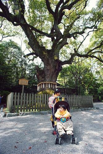 大楠樹前合照