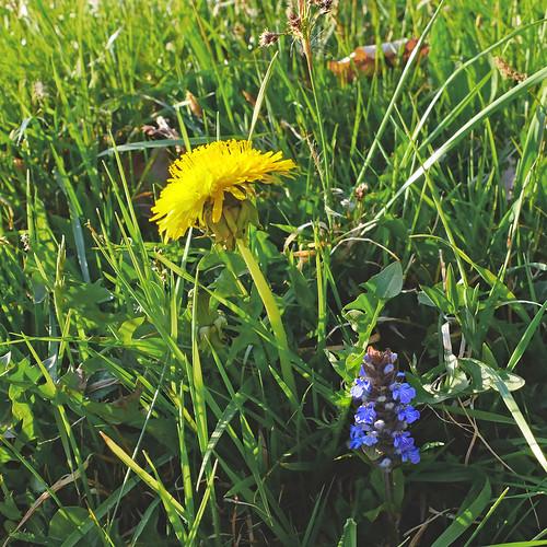 Wiese - meadow -