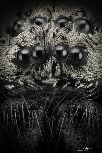8 ojos