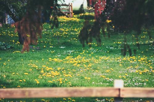 Garden Bokeh   27. April 2019   Tarbek - Schleswig-Holstein - Deutschland
