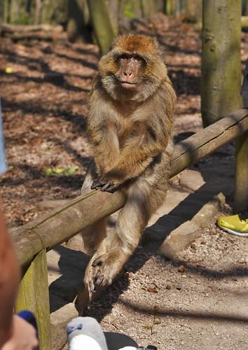 Montagne des singes D500 (220) 3
