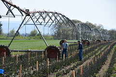 Linear Irrigation Project, Keudell Farm, Marion County