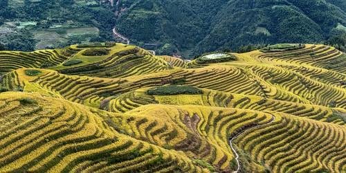 *Ping'an terraced rice fields @ Qi Xing Ban Yue*