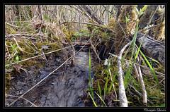 Marais du Cônois (marais tufeux de pente) - Photo of Gurgy-la-Ville