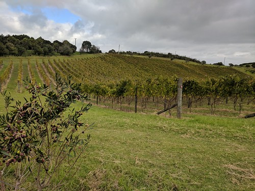 Cable Bay Vineyards