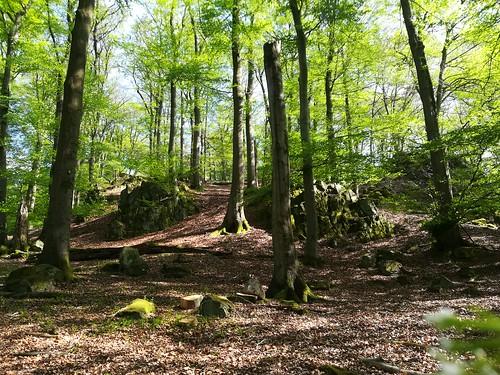 Wald bei Niedersayn , Westerwald
