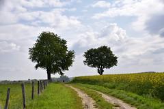 Chemin campagnard - Photo of Schœnenbourg