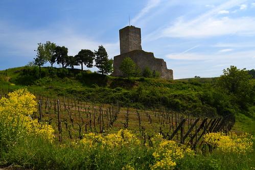 Le château du Wineck (Katzenthal, F)