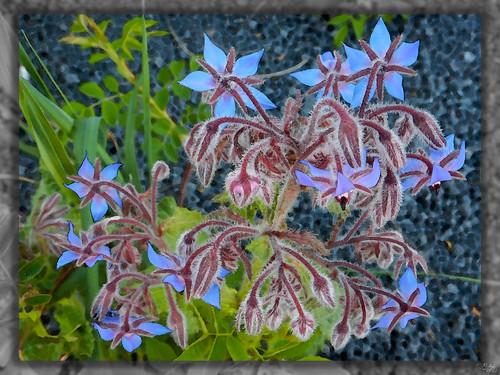 Fleurs 950_2