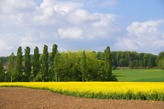 Couleurs de mai - Photo of Oberhoffen-lès-Wissembourg