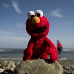 Elmo visits Dana Point 3