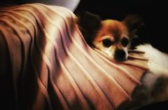 Meet Tootsie :)